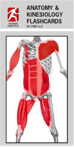 Anatomy And Kinesiology Flashcards 9781450428378 9781492563990